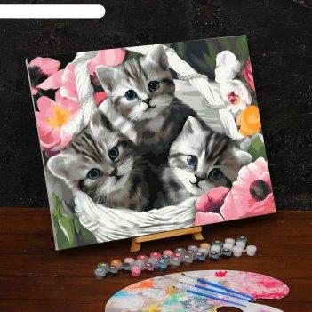 Картина по номерам на холсте с подрамником «котята» 40х50 см