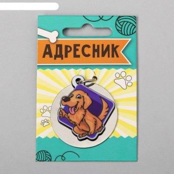 Адресник под гравировку + подвес акрил барбос,  4*4 см