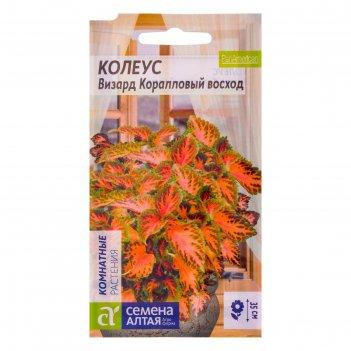 Семена комнатных растений колеус визард коралловый восход, мн, цп, 10 шт.
