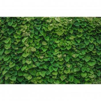 Фотобаннер 250 х 200 см, с фотопечатью зеленая стена