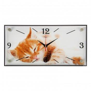 Часы настенные, серия: животный мир, котик, 19х39 см