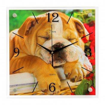 Часы настенные, серия: животный мир, спящий бульдог, 35х35 см