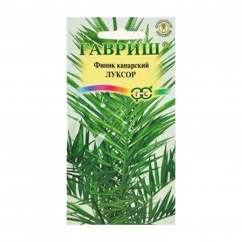 Семена комнатных растений финик канарский луксор, мн., 2 шт.