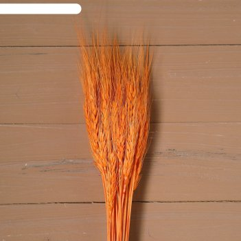 Сухой колос пшеницы, набор 50 шт, цвет оранжевый