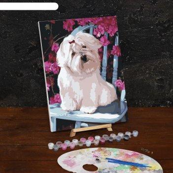 Картина по номерам на холсте собака на стуле, 40*30 см