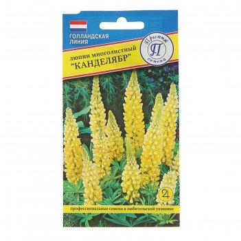 Семена люпин канделябр, мн, 15 шт