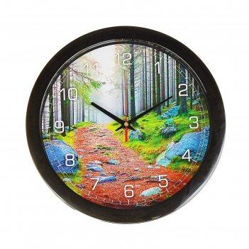 Часы настенные, серия: природа, лесная тропа, 28х28 см
