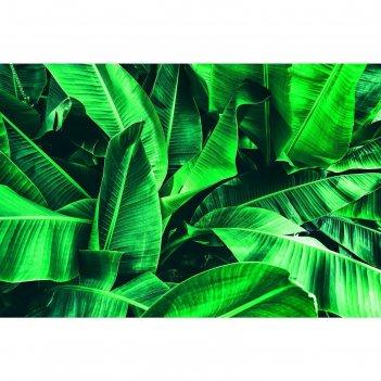Фотобаннер 300 х 200 см, с фотопечатью большие листья