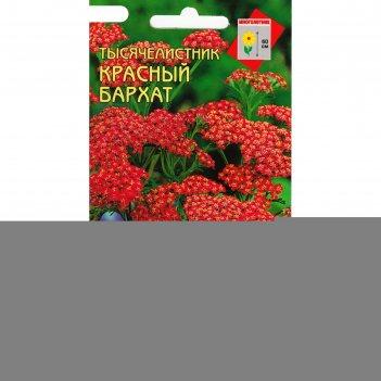 Семена тысячелистник красный ахиллея красный бархат, дом семян, мн, 250 шт