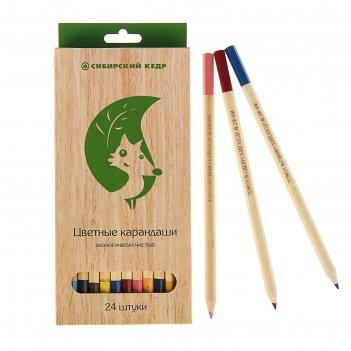 Карандаши 24 цвета «сибирский кедр. eco», шестигранные, ok 6.9 мм