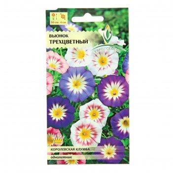 Семена цветов вьюнок трехцветный,смесь однолетник 0,5 г.
