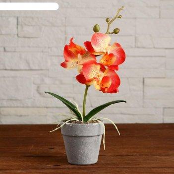 Композиция в горшочке орхидея 7х23 см, микс