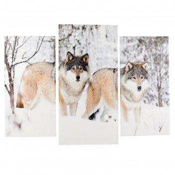 Модульная картина волки в снегу (2-25х50, 30х60 см) 60х80 см