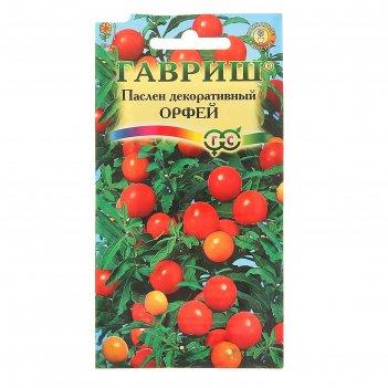 Семена комнатных растений паслён декоративный орфей, мн., 12 шт.