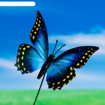 Штекер для комнатных растений бабочка 7*8 см, длина 25см