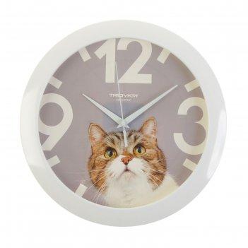 Часы настенные, серия: животный мир, кот, белый обод, 29х29 см