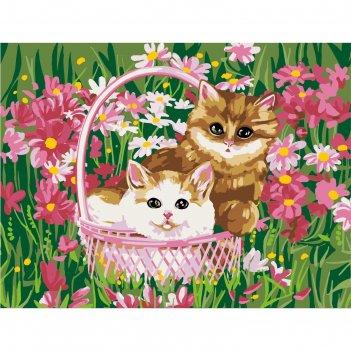 Картина по номерам на холсте с подрамником котята 30*40 см