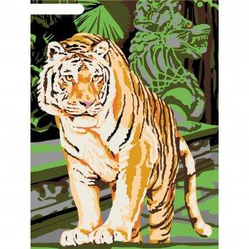 Картина по номерам на холсте с подрамником бенгальский тигр 30*40 см