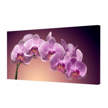 Картина на холсте ветка орхидеи 50*100 см