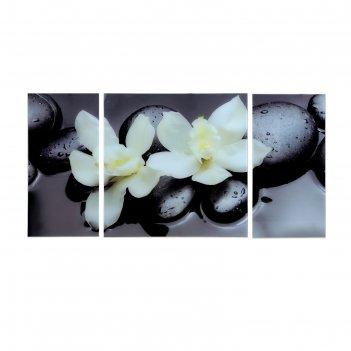 Картина модульная пара орхидей 100*50 см