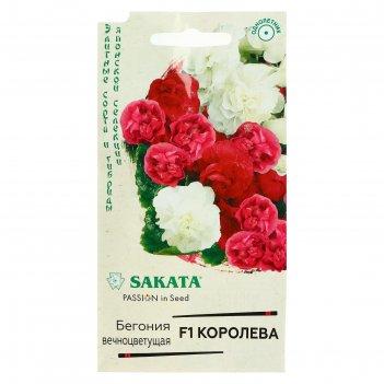 Семена цветов бегония королева, f1, вечноцветущая, махровая, смесь, серия