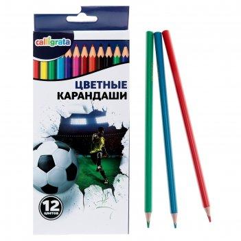 Карандаши callligrata, 12 цветов, в картонной коробке, «футбол»