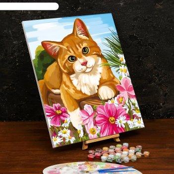 Картина по номерам на холсте с подрамником «котик» 40x50 см