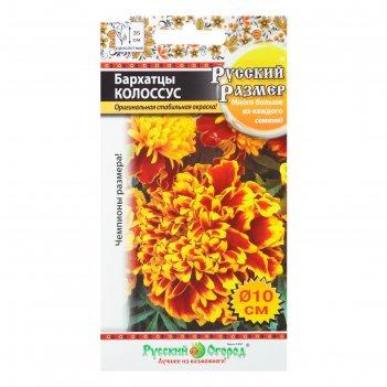 Семена цветов барцаты отклоненные колоссус , 30 шт