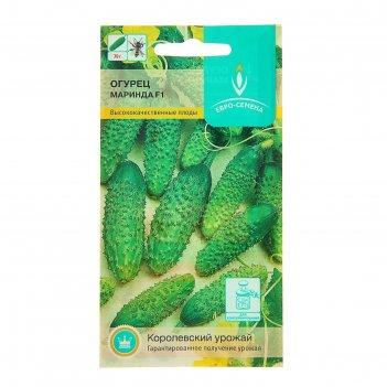 Семена огурец маринда f1, партенокарпический, 10 шт.