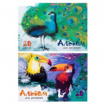 Альбом для рисования а4, 20 листов, на клею, erich krause «птицы жарких ст