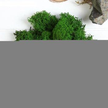 Мох стабилизированный салатовый 50 гр.