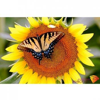 Картина стразами бабочка на подсолнухе