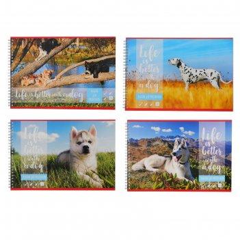 Альбом для рисования а4, 48 листов на гребне «собака-лучший друг!», обложк