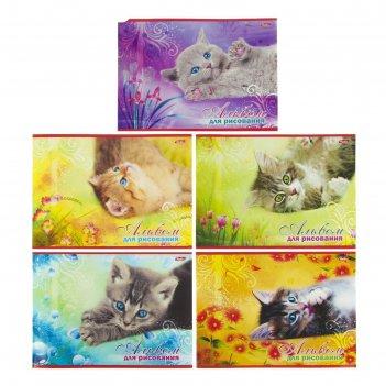Альбом для рисования а4, 20 листов на скрепке котята, блок офсет 100г/м2