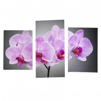 Модульная картина на подрамнике нежная орхидея, 33x25, 33x50, 33x65 см, 99