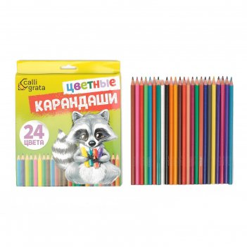 Карандаши 24 цвета, calligrata