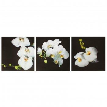 Модульная картина на подрамнике орхидея, 3 шт. — 28x28 см, 28x84 см