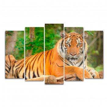 Модульная картина на холсте с подрамником тигр