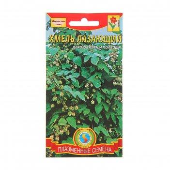 Семена цветов хмель лазающий, до 4 м. в длину, мн., 4 шт
