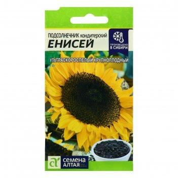 Семена подсолнечник енисей, цп, 10 г