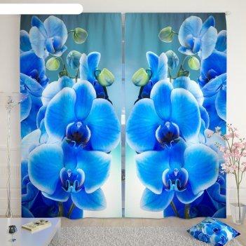 Фотошторы «голубая орхидея», размер 145 x 260 см, габардин