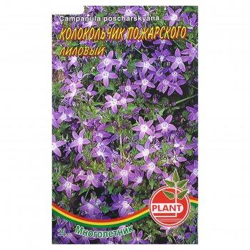 Семена цветов колокольчик пожарского лиловый, мн, 0,03 г