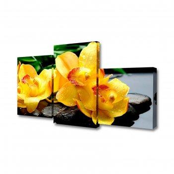Картина модульная на холсте орхидеи на камнях 55*94см