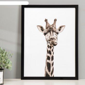 Постер пластик любознательный жираф 30х40 см