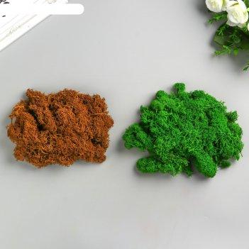 Мох стабилизированный 2 в 1 зелёный и коричневый  100 гр.