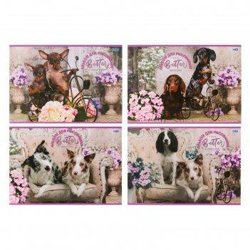 Альбом д/рис а4 16л на скрепке собаки с цветами, обл мел карт, микс ар4ск1