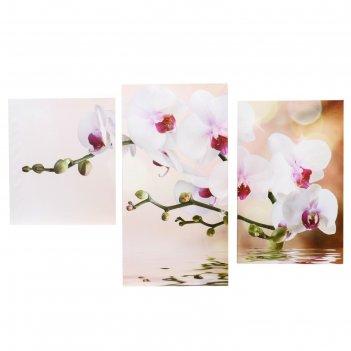 Картина модульная на подрамнике  цветущая орхидея 30х35,30х46,30х56 см; 90