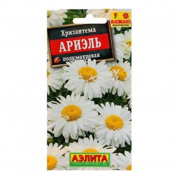 Семена цветов хризантема ариэль, мн, 0,1 г