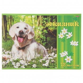Эскизник а4, 12 листов на скрепке счастливый пёс, бумажная обложка