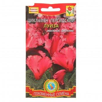 Семена комнатных цветов цикламен персидский луиза, мн., 3 шт